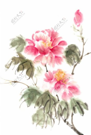 国画牡丹花图片