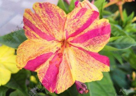 小区内的花鲜花图片