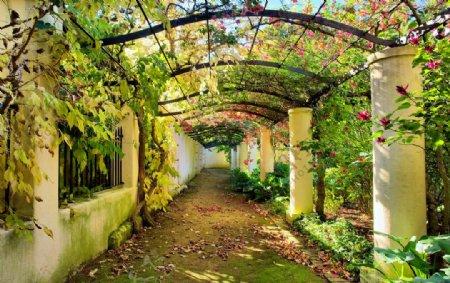 花园过道图片