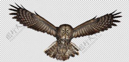 猫头鹰图片