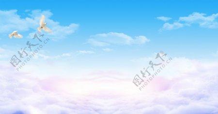 蓝天白云白鸽图片