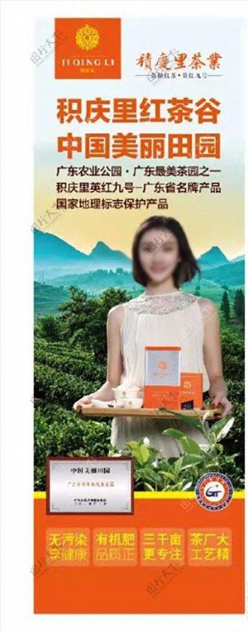 红茶英红九号茶叶茶园图片