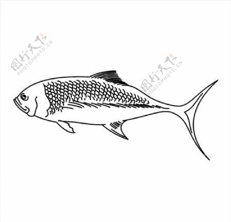 淡水鱼矢量图图片