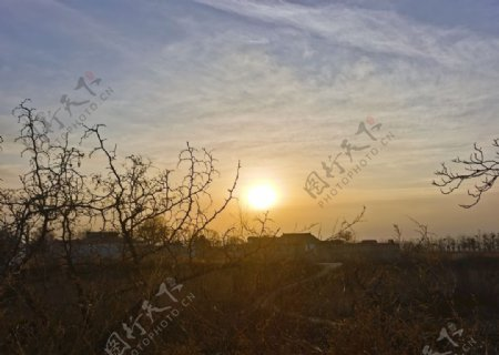 树梢上的太阳图片