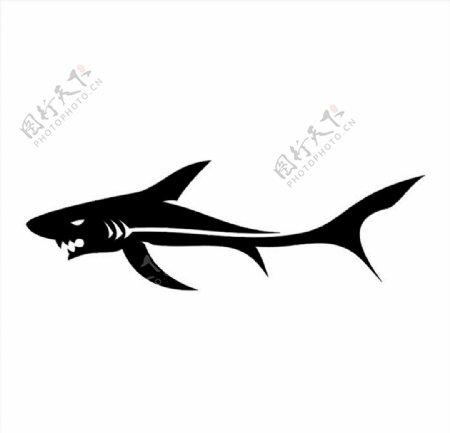 鲨鱼矢量图图片