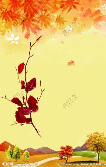 枫叶素材图片