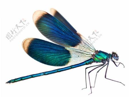 好看的花蜻蜓图片