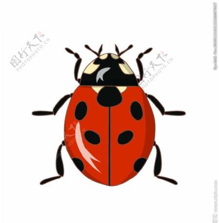 手绘卡通瓢虫图片