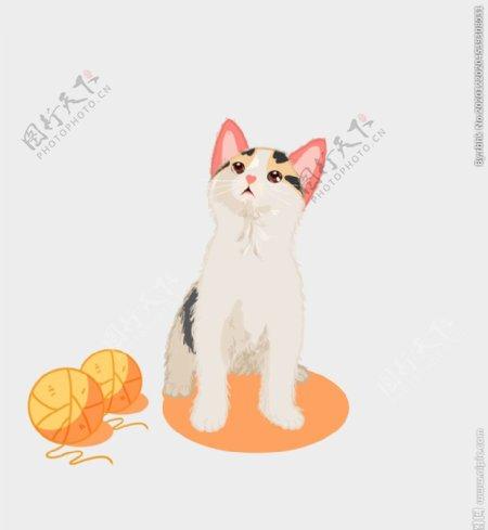 线球和小猫图片