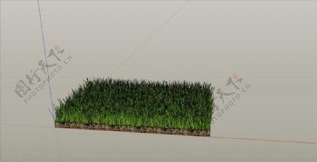 草皮SU模型图片