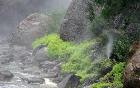 园林地被植物佛甲草的景观应用图片