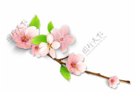 桃花矢量花卉图片