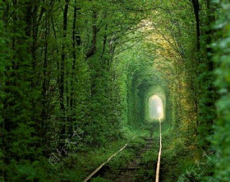 森林铁轨图片