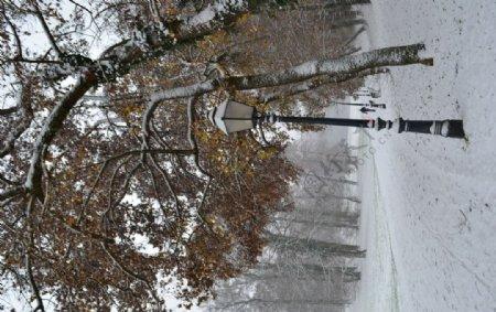 冬天路灯树木大雪风景图片