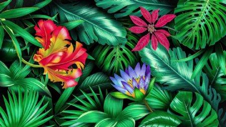 植物插画图片